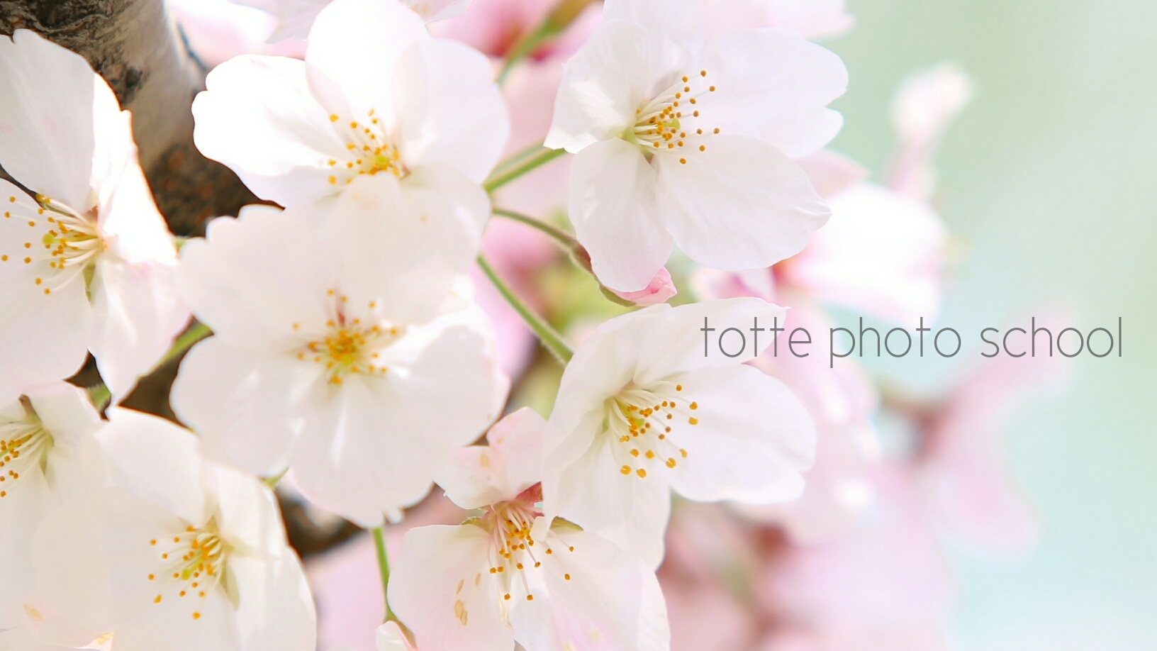 桜 totte photo school.jpg